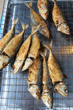 Mackerel fried in the kitchen Royalty Free Stock Photo