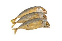 Mackerel Fried Stock Image