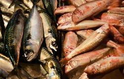 Mackerel and Goatfish Royalty Free Stock Photography