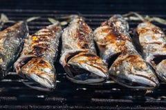 Mackerel grilled Stock Image