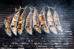 Mackerel grilled Stock Image