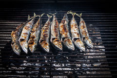 Mackerel grilled Royalty Free Stock Photography