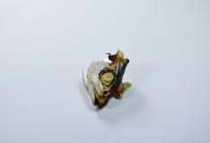Mackerel head left over eat on white background Royalty Free Stock Image