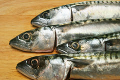Mackerel heads Stock Photography
