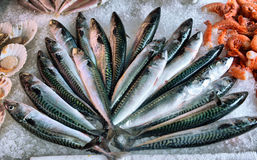 Mackerel on ice on display. In a fish market stock images