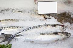 Mackerel on ice. Fresh whole mackerel on ice Royalty Free Stock Photo