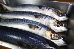 Fresh mackerel fish in kitchen royalty free stock photography