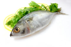 Mackerel with Lemon Stock Photography