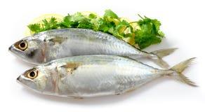 Mackerel with Lemon. On white background Royalty Free Stock Images