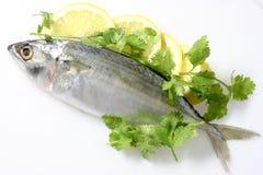 Mackerel with Lemon. On white background Royalty Free Stock Image