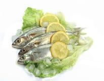Mackerel with Lemon Stock Photo