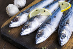 Mackerel. With lemon and garlic at cutting table royalty free stock photography
