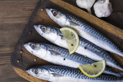 Mackerel Royalty Free Stock Image