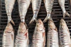 Mackerel Royalty Free Stock Image
