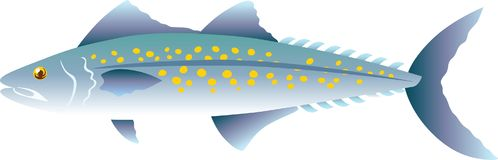 Mackerel Ocean Fish Vector Illustration. For any purpose and media such as cover and illustration book, education purpose, wallpaper, website, blog, print on royalty free illustration