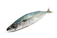 Mackerel over white Stock Photos