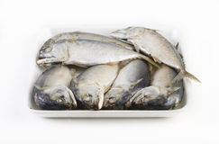 Mackerel in package Royalty Free Stock Photo