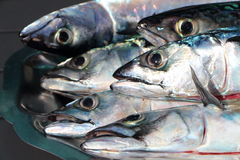 Mackerel on a pewter dish Royalty Free Stock Images
