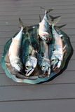 Mackerel on a pewter dish Stock Images