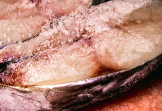 Mackerel pieces, Fish frozen. Mackerel pieces, Fish be frozen Stock Photos
