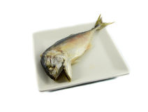 Mackerel on plate Stock Photography