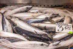 Mackerel in retail fridge Stock Images