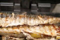 Mackerel is roasted on an electric grill. Grilled fish with lemon and salad royalty free stock photography