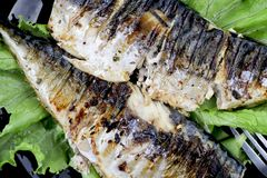 Mackerel is roasted on an electric grill. Grilled fish with lemon and salad royalty free stock image