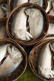 Mackerel in seafood market. Stock Images