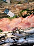 Mackerel and skate wings Royalty Free Stock Photography