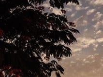 Mackerel Sky at Dusk. Cumulous cloud at dusk (mackerel sky Stock Photo