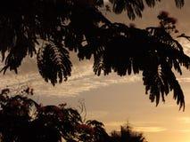 Mackerel Sky at Dusk Stock Image