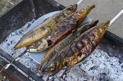 Mackerel smoked on a platter Stock Photography