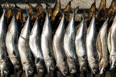 Mackerel on a spit. Mackerel roasting on a spit. Famous Steckerlfisch also served at the Oktoberfest in Munich, Bavaria royalty free stock photos
