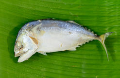 Mackerel steamed on banana leaf Stock Photography