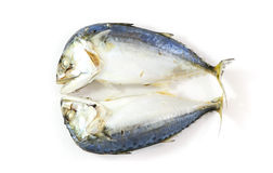 Mackerel steamed isolated Stock Photography