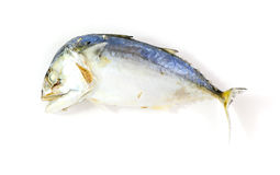 Mackerel steamed isolated. For food background Royalty Free Stock Photo