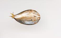 Mackerel steamed. Royalty Free Stock Photo