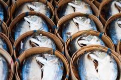 Mackerel stream fish Stock Photography