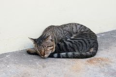 Mackerel tabby cat laying down on floor. Homeless cute cat sleeping and relaxing Royalty Free Stock Photo