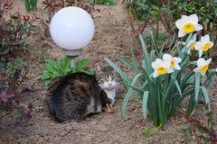 Mackerel tabby cat lies in the flower garden. Near a garden lamp stock image