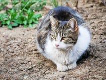 Mackerel tabby cat lies in the flower garden. Near a garden lamp royalty free stock photo