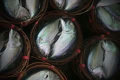 Mackerel on thai markets. In basket Royalty Free Stock Images