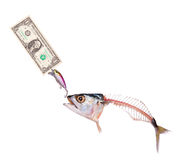 Mackerel to eat banknote dollar Royalty Free Stock Photos