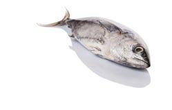 Mackerel Tuna Fish I Stock Photo