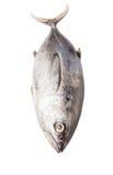Mackerel Tuna Fish IV Stock Photo