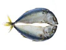 mackerel två royaltyfri fotografi