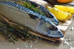 Mackerel Stock Image
