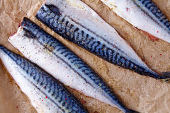 Mackerel uncoocked fillet Royalty Free Stock Images