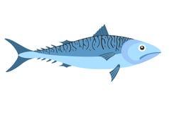 Mackerel. Vector illustration (EPS 10 Royalty Free Stock Image